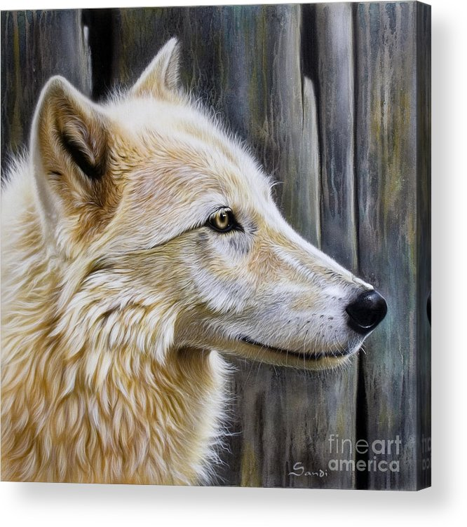 Wolves Acrylic Print featuring the painting Rose by Sandi Baker