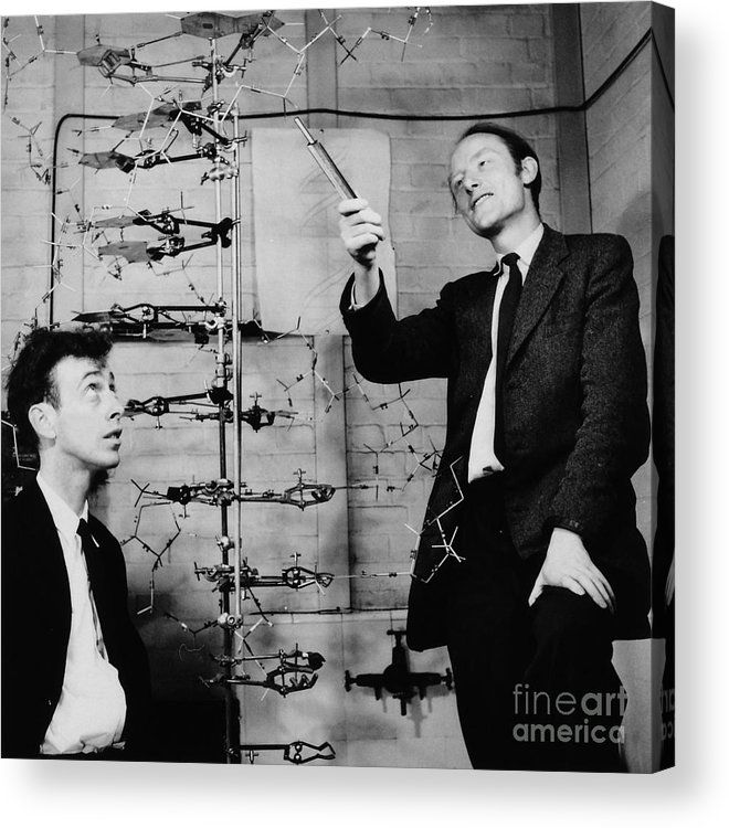 Watson Acrylic Print featuring the photograph Watson And Crick by A Barrington Brown and Photo Researchers