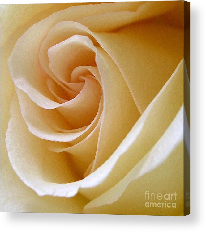Rose Acrylic Print featuring the photograph White Rosebud by Addie Hocynec