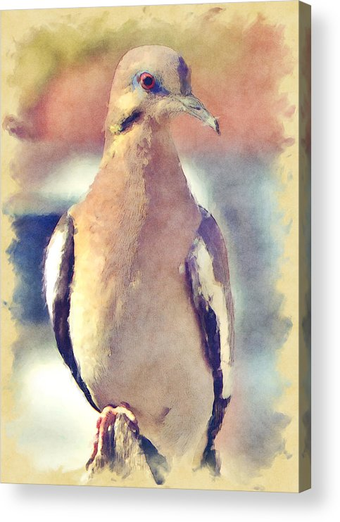 Dove Acrylic Print featuring the photograph White-Winged Dove by David G Paul