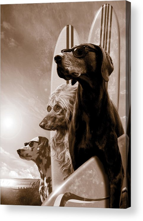 Animal Acrylic Print featuring the photograph Changes by MGL Meiklejohn Graphics Licensing