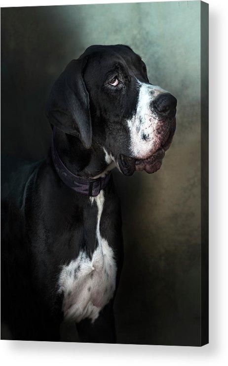 Pets Acrylic Print featuring the photograph Helga by Silversaltphoto.j.senosiain