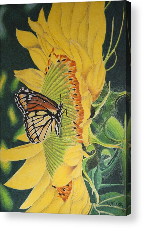 Nature Acrylic Print featuring the painting Monarch summer by Wade Clark