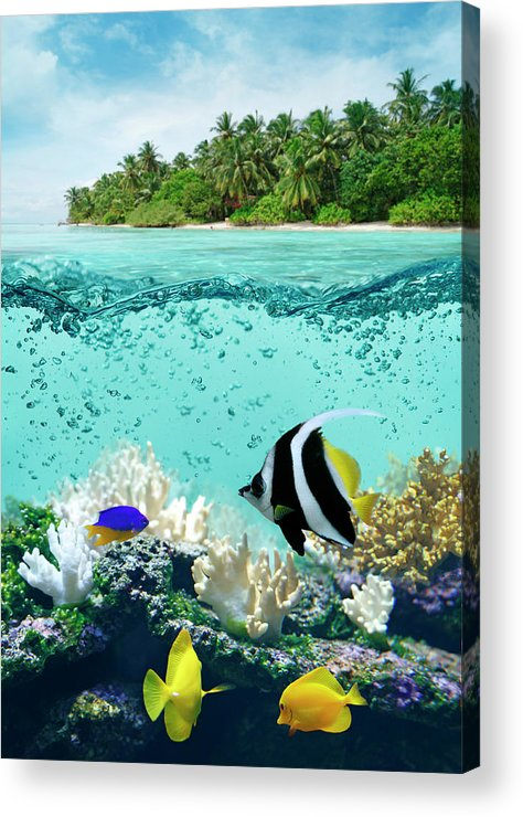 Bedrock Acrylic Print featuring the photograph Underwater Life In Tropical Sea by Narvikk