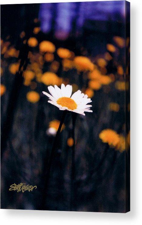A Daisy Alone Acrylic Print featuring the photograph A Daisy Alone by Seth Weaver