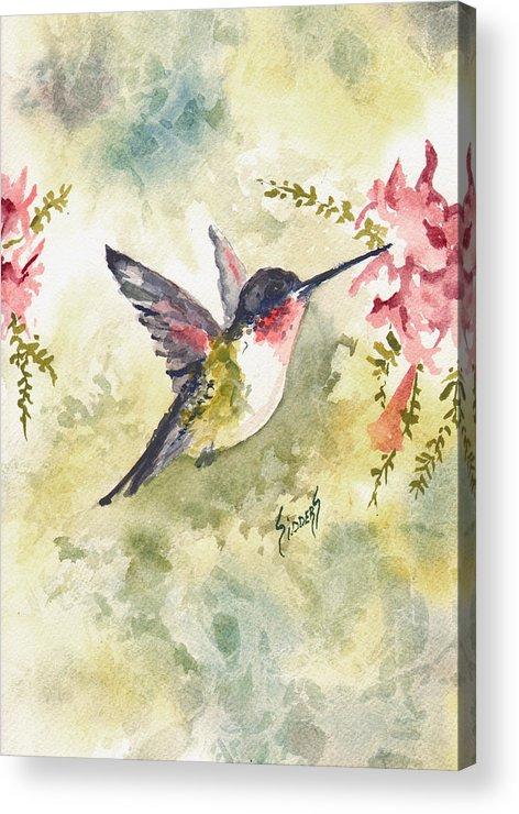 Hummingbird Acrylic Print featuring the painting Hummingbird by Sam Sidders