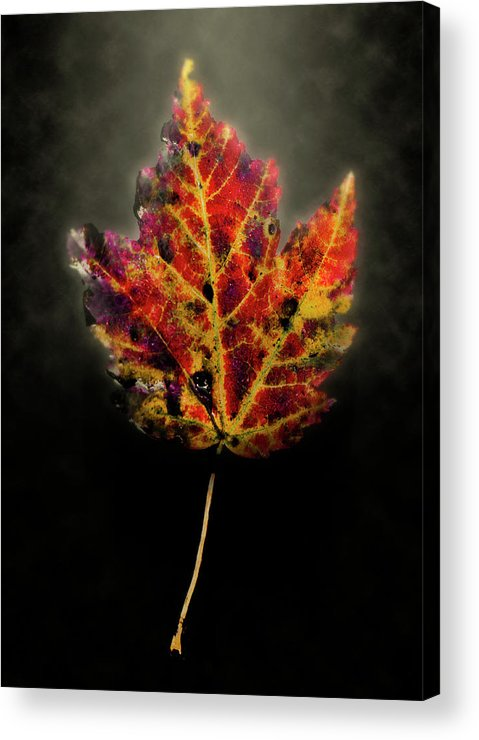 Leaf Acrylic Print featuring the photograph Autumn by Jim Painter