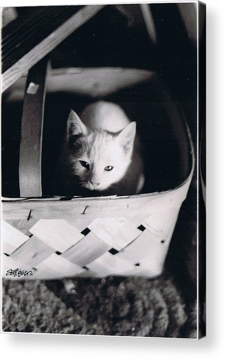 Cat Acrylic Print featuring the photograph Basket Full of Charlemagne by Seth Weaver