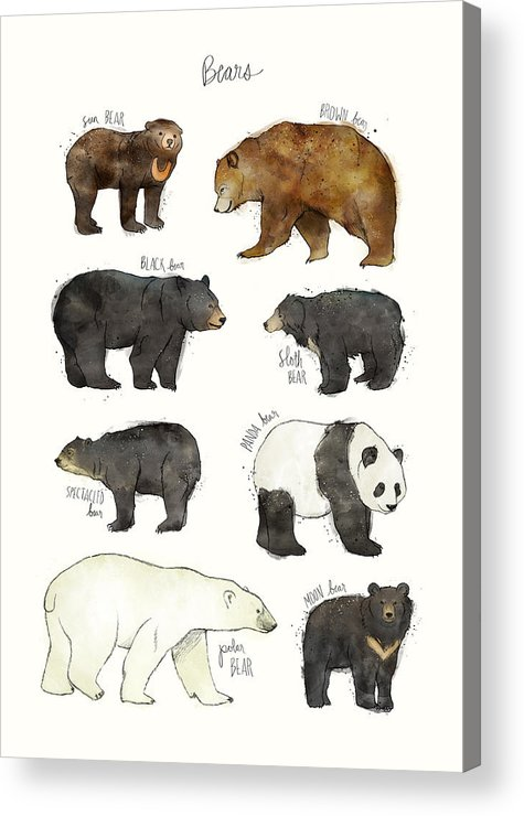 Bear Acrylic Print featuring the drawing Bears by Amy Hamilton