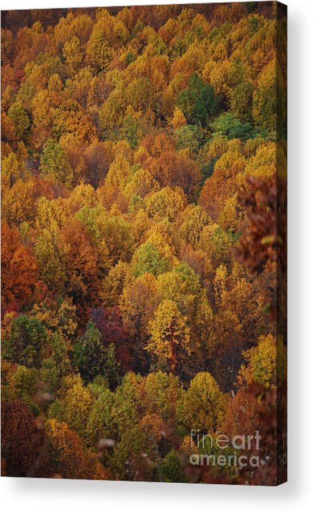Fall Acrylic Print featuring the photograph Fall Cluster by Eric Liller
