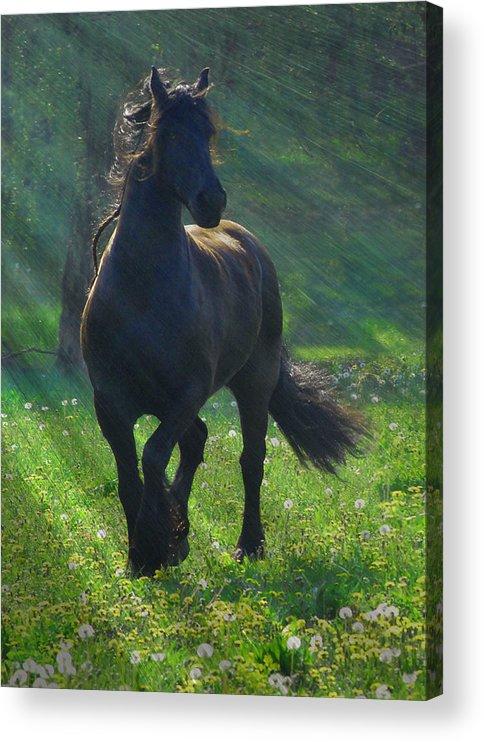 Horses Acrylic Print featuring the photograph Friesian Sun by Fran J Scott