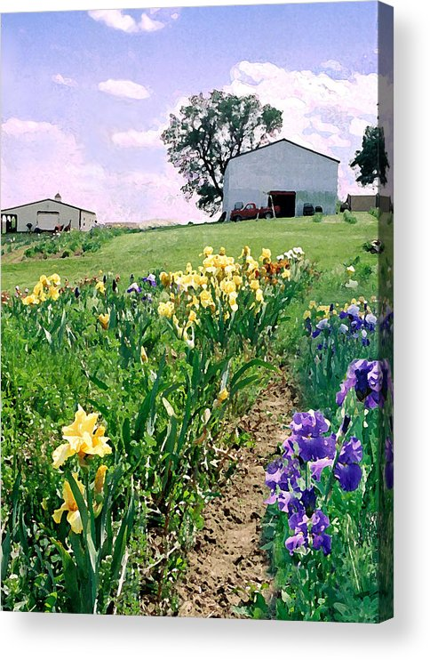 Landscape Painting Acrylic Print featuring the photograph Iris Farm by Steve Karol