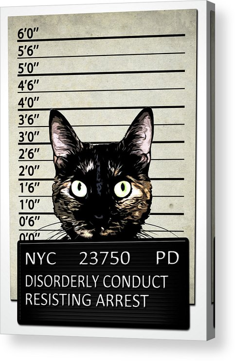 Cat Acrylic Print featuring the mixed media Kitty Mugshot by Nicklas Gustafsson