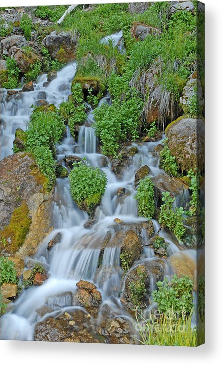 Logan Canyon Acrylic Print featuring the photograph Logan Canyon Cascade by Dennis Hammer
