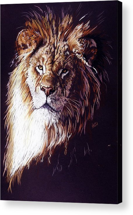Lion Acrylic Print featuring the drawing Maestro by Barbara Keith