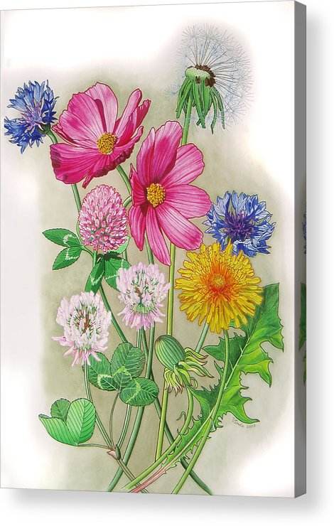 Flowers Acrylic Print featuring the painting Midsummer Day Dream by Vlasta Smola