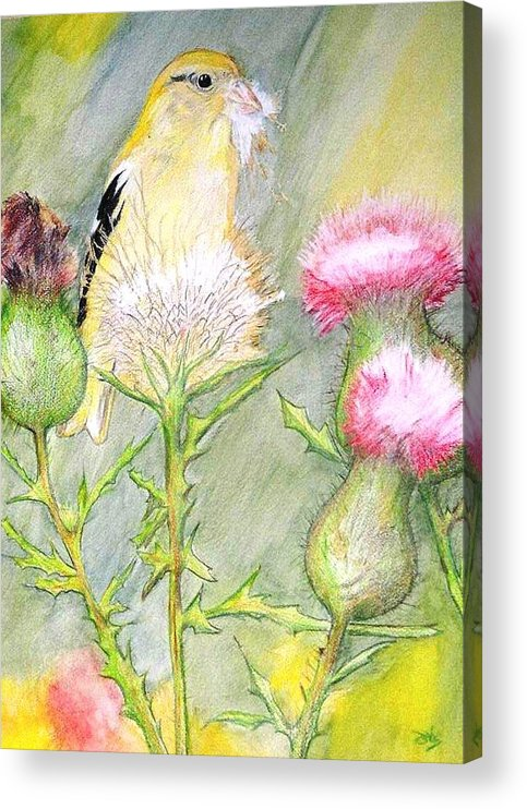 Goldfinch Acrylic Print featuring the painting Nest Fluff by Debra Sandstrom