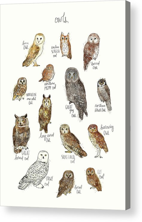 Owl Acrylic Print featuring the painting Owls by Amy Hamilton