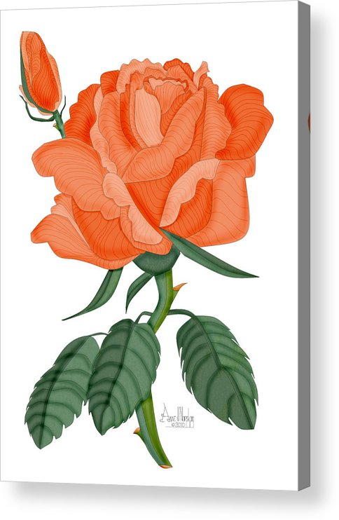 Rose Acrylic Print featuring the painting Peach Brandy Wine Rose by Anne Norskog