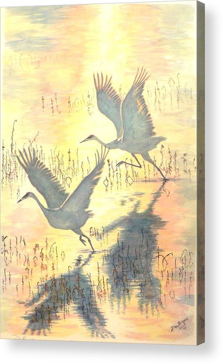 Cranes Taking Flight Acrylic Print featuring the painting Sandhill Cranes by Dan Bozich