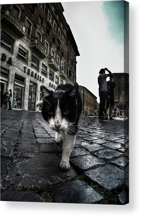 Cat Acrylic Print featuring the photograph Street Cat by Nicklas Gustafsson