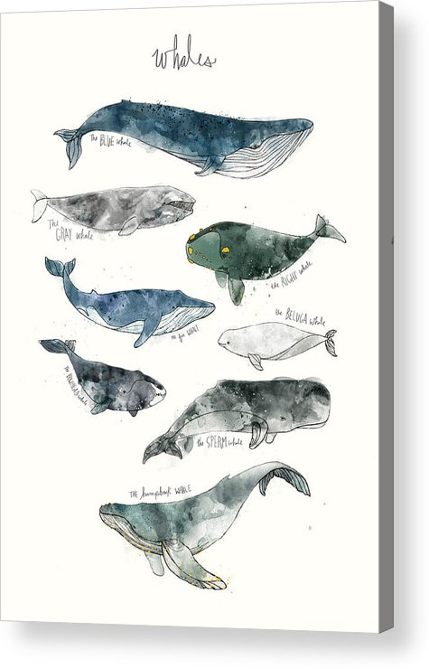 Whales Acrylic Print featuring the painting Whales by Amy Hamilton