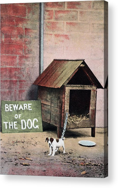 Pets Acrylic Print featuring the photograph Beware Of Dog Sign With Small Dog by Brand X Pictures