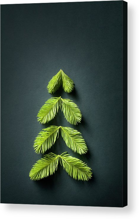Needle Acrylic Print featuring the photograph Christmas Tree by Malerapaso