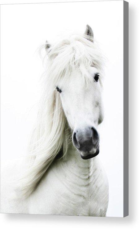 Horse Acrylic Print featuring the photograph Snowhite by Gigja Einarsdottir