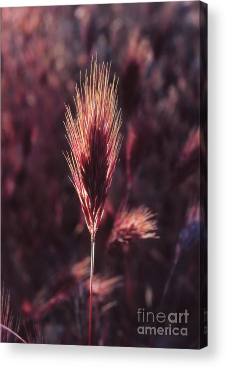 Acrylic Print featuring the photograph Untitled by Randy Oberg