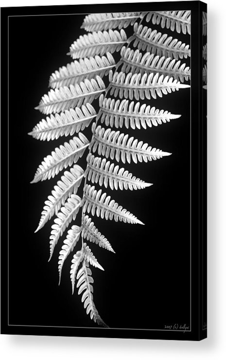 Australia; Floral Acrylic Print featuring the photograph Fern Dance by Holly Kempe