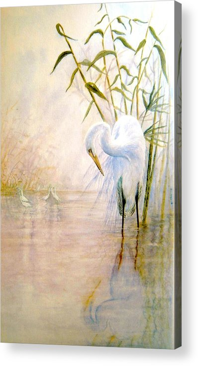 Eret; Bird; Low Country Acrylic Print featuring the painting Egret by Ben Kiger
