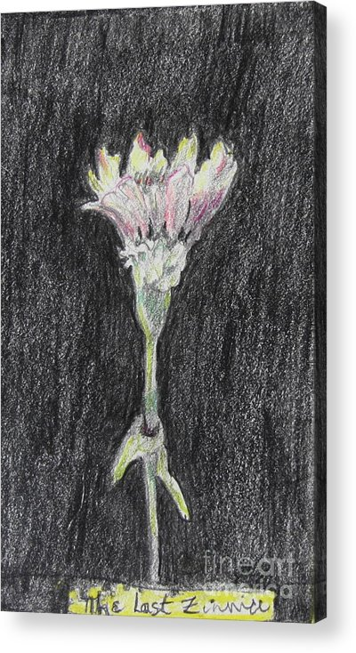 Flowers Acrylic Print featuring the drawing The Last Zinnia by Jan Bennicoff