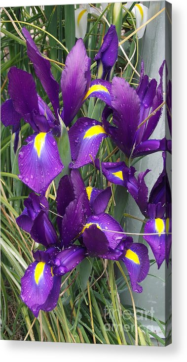 Flowers Acrylic Print featuring the photograph Purple Iris by Gail Salitui