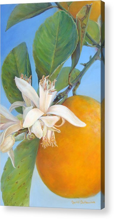 Floral Painting Acrylic Print featuring the painting Fleurs d oranges by Muriel Dolemieux