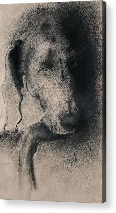 Weimaraner Acrylic Print featuring the drawing Silhouette by Cori Solomon