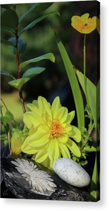 Dahlia Acrylic Print featuring the photograph Uplifting the Dahlia by D Lee