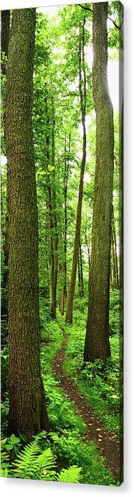 Scenics Acrylic Print featuring the photograph Footpath Between The Trees by Tomchat