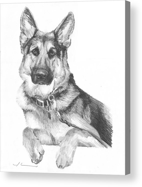 <a Href=http://miketheuer.com Target =_blank>www.miketheuer.com</a> Shepherd Dog Pencil Portrait Acrylic Print featuring the drawing Shepherd Dog Pencil Portrait by Mike Theuer