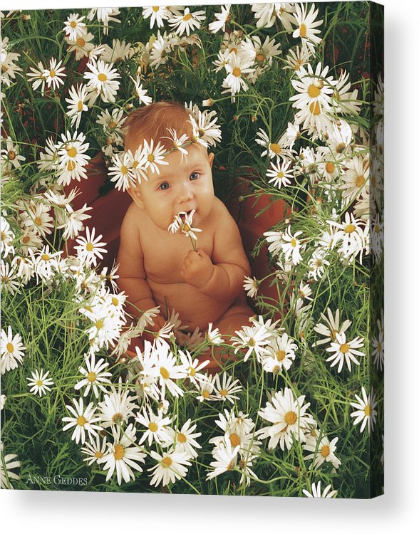 Daisies Acrylic Print featuring the photograph Daisies by Anne Geddes
