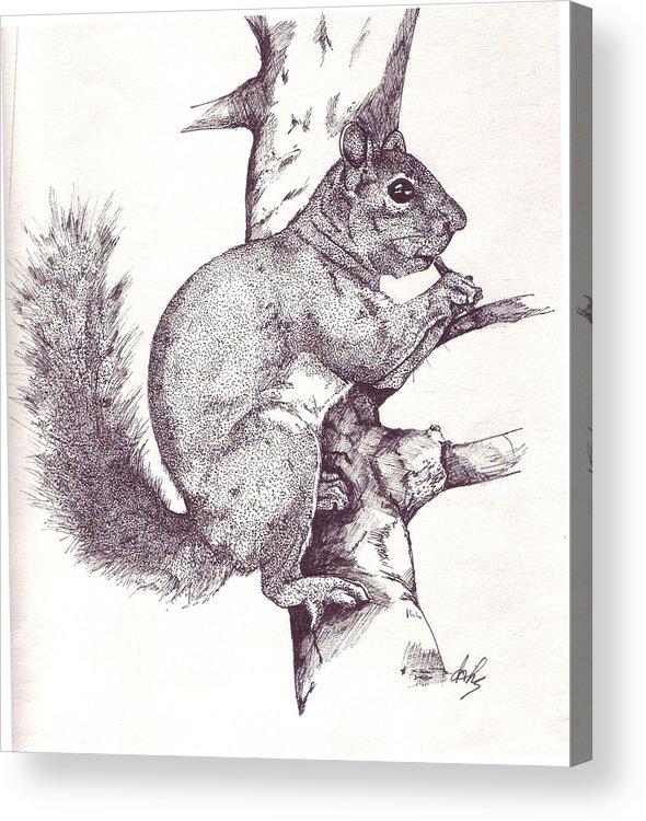 Squirrel Acrylic Print featuring the drawing Grey Squirrel by Debra Sandstrom