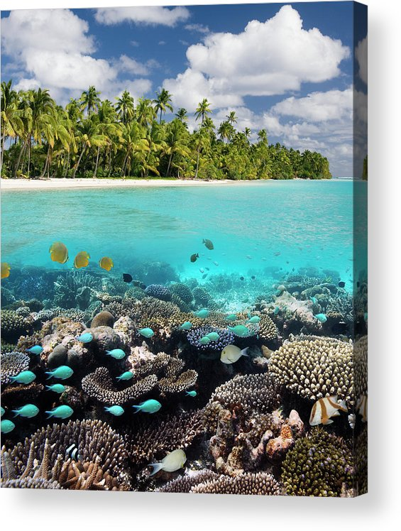 Underwater Acrylic Print featuring the photograph Tropical Paradise - The Maldives by Steve Allen