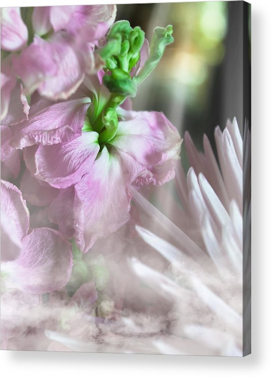 Floral Acrylic Print featuring the photograph Heaven Sent by Kathy Nairn