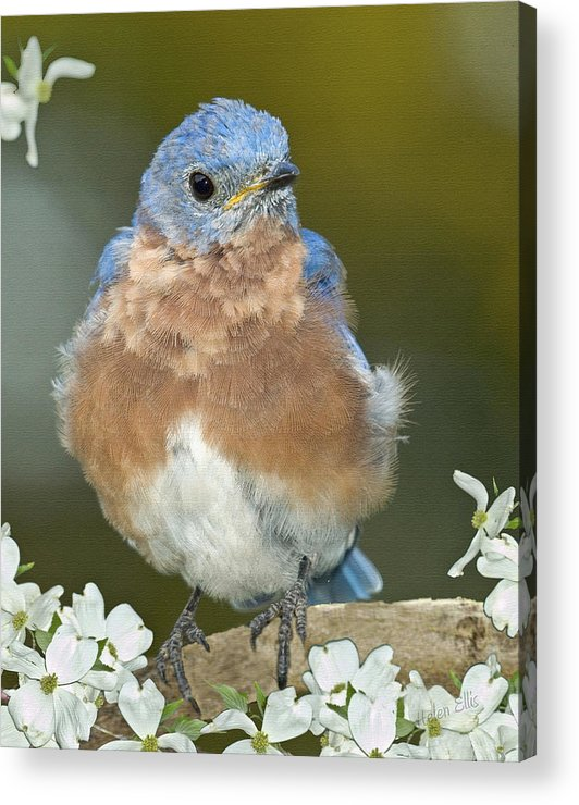 Birds Acrylic Print featuring the photograph Why Be Mad by Helen Ellis