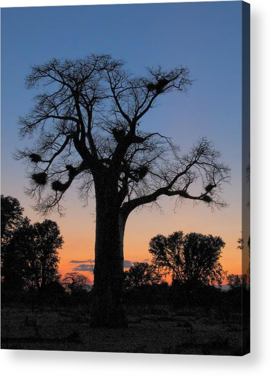 Africa Acrylic Print featuring the photograph Sunset Baobab by Scott and Rebecca Rothney