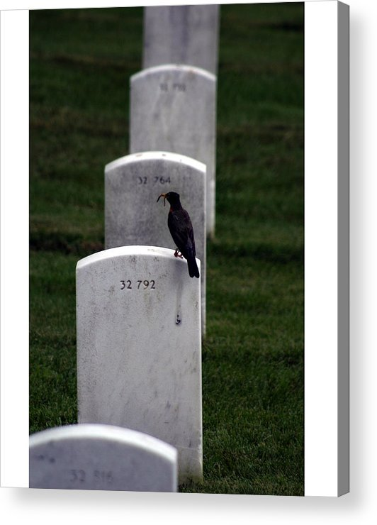 Age Acrylic Print featuring the photograph Cycle Of Life by Thomas Michael Corcoran