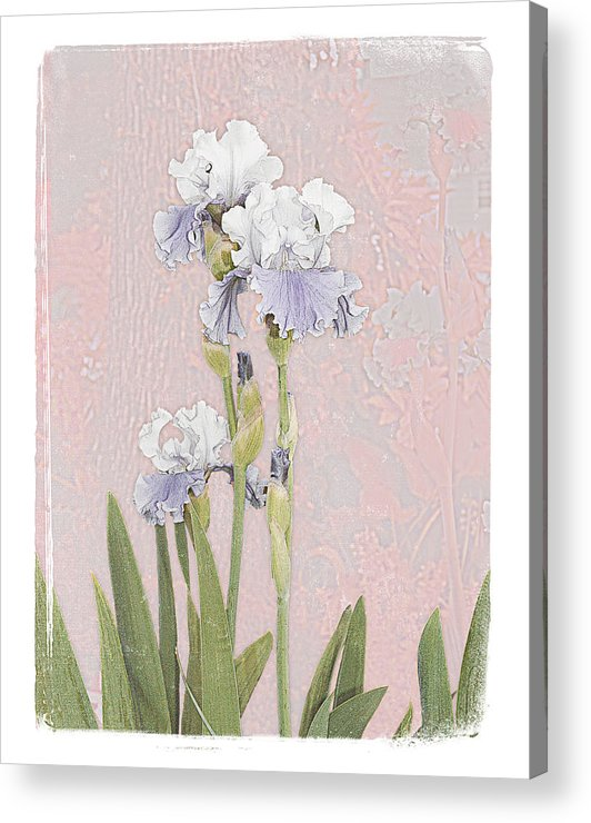 Flowers Garden Beautiful Old Iris Acrylic Print featuring the photograph Iris 2 by Inesa Kayuta