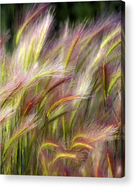 Plants Acrylic Print featuring the photograph Tall Grass by Marty Koch