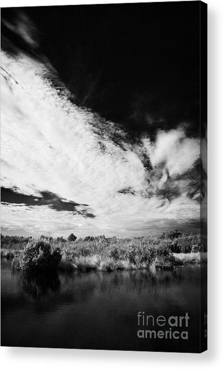 Florida Acrylic Print featuring the photograph Flooded Grasslands And Mangrove Forest In The Florida Everglade by Joe Fox