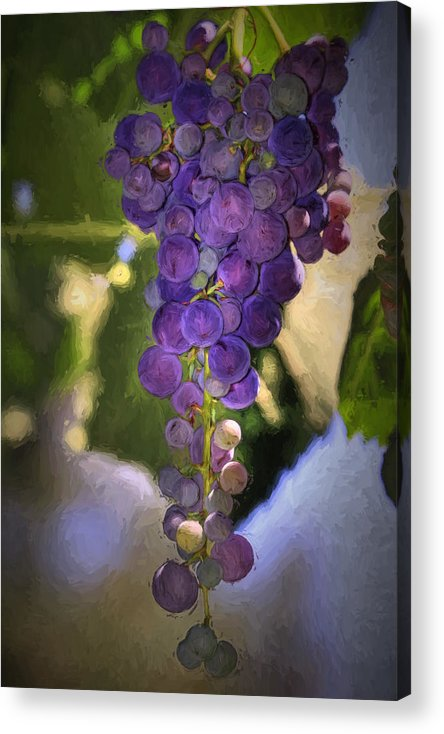 Grape Acrylic Print featuring the photograph Fruit Of The Vine by Donna Kennedy